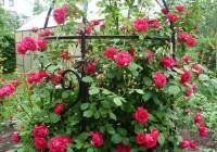 Шпалера под плетистые розы
